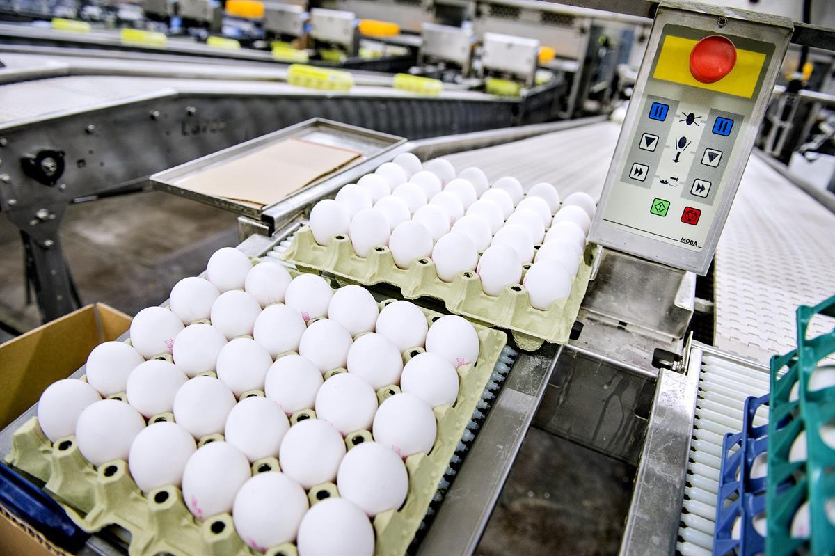 Kuinka suuri on keskimääräinen koko munaa