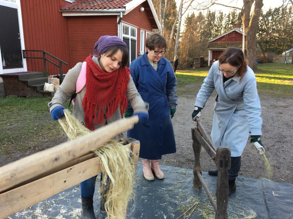 Opettaja Fiia Malmivaaran pellavia loukutetaan ja lihdataan Raudaskylässä