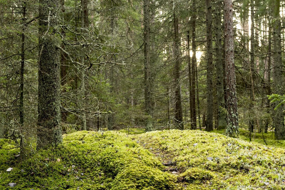Jos metsään haluat mennä nyt